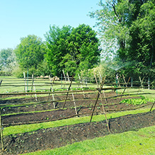 http://www.bailliesmanor.co.za/wp-content/uploads/2016/07/Veggie-Patch.jpg
