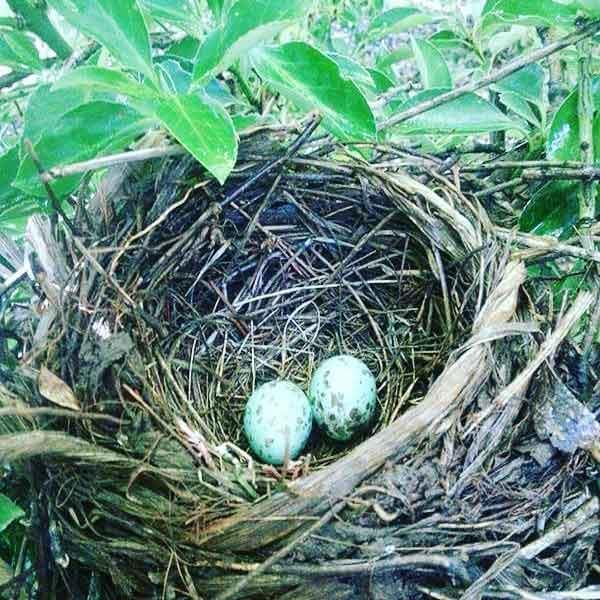 https://www.bailliesmanor.co.za/wp-content/uploads/2016/07/Bird-Eggs.jpg